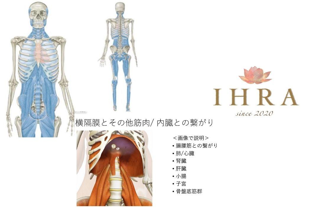 内臓リリースで腰痛ケアができるようになる